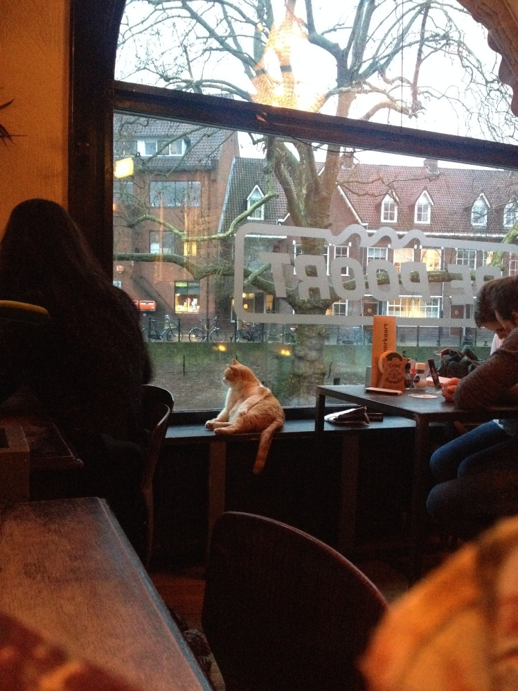 bring-a-cat-to-a-restaurant-to-deal-with-your-post-erasmus-depression.jp